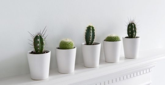 an array of cacti on a white mantle.